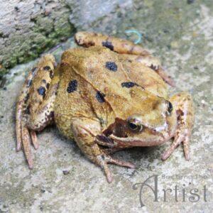 reussir ses objectifs faire la pire tache au matin tel manger une grenouille